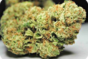 god-bud weed,marijuana