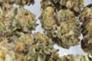 thin-mint-girl-scout-cookies,weed,marijuana online